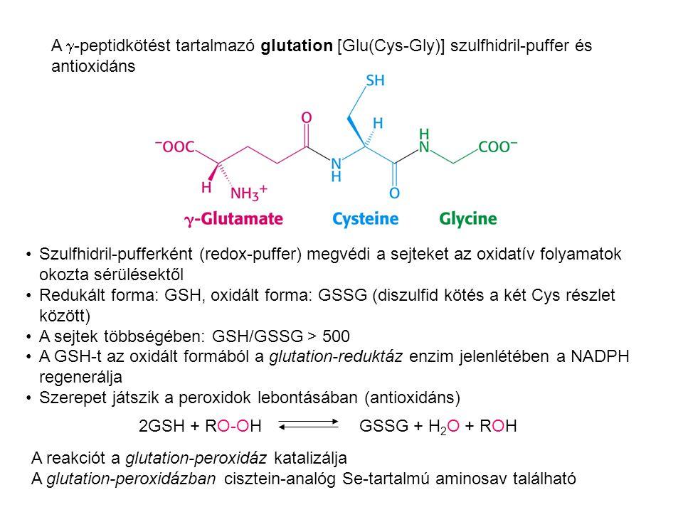 A g-peptidkötést tartalmazó glutation [Glu(Cys-Gly)] szulfhidril-puffer és antioxidáns